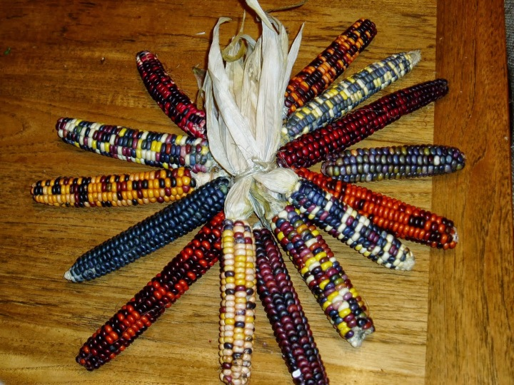 corn.gmo